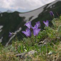Le Alpi Apuane, giardino d'Europa