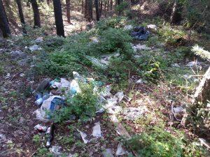 Rifiuti abbandonati nel bosco