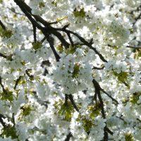 Aprile… apre a grandi passi