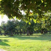 Al via i lavori per riqualificare la Selva di Filetto