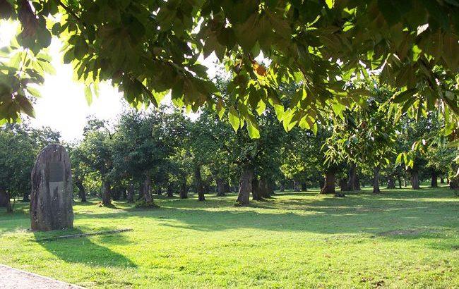 Interventi di miglioramento per la Selva di Filetto