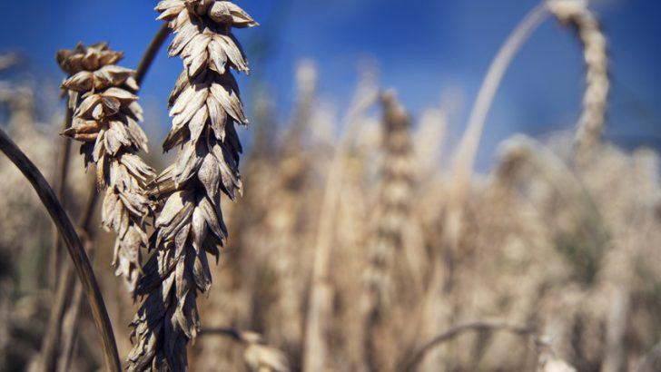 I cambiamenti climatici mettono a rischio l'agricoltura: servono interventi strutturali per far fronte alla siccità