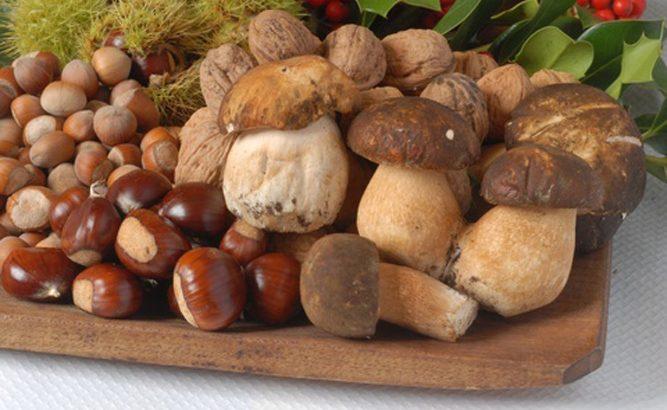 Appuntamenti  con i  funghi  e le castagne