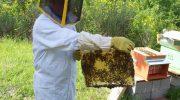 Il miele della Lunigiana ritrova qualità e la DOP