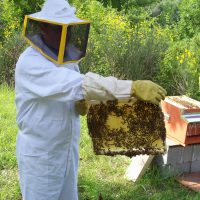 Secco calo della produzione di miele, a rischio anche la DOP
