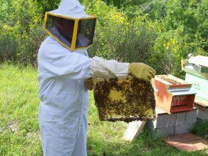 raccoglitore-miele