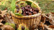 Lunigiana: buona ripresa per la lavorazione delle castagne