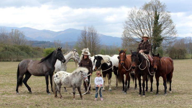 """Crescono bene nella fattoria """"La Virgola"""" a Cavezzana le mucche Angus"""