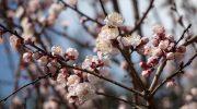 Tavolozza di marzo… con tanto grigio