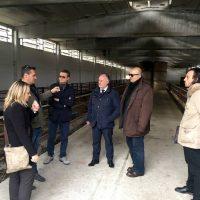 """Villafranca: il gruppo Cremonini interessato ad allevare bovini in località """"Fola"""""""