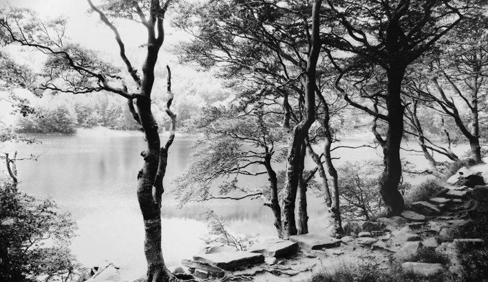 Il bosco dall'Appennino al grande fiume nelle foto di Marco Fallini