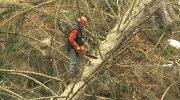 Una filiera del legno per valorizzare il territorio