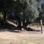 Allineamenti di statue menhir