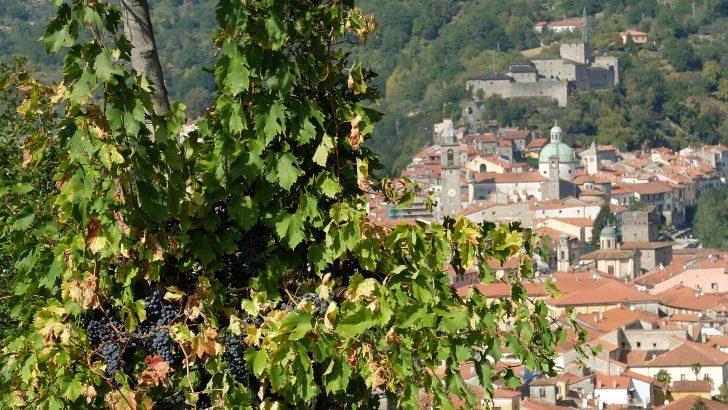 La Lunigiana vince la scommessa dei vini di qualità