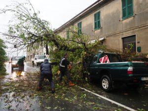 In alcune zone del territorio sono caduti anche rami e tronchi di alberi. Solerte il lavoro della Protezione Civile (foto Massimo Pasquali)