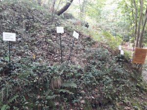 Alcune delle poesie di Fabrizio Rosi esposte lungo il sentiero che da Cavezzana porta al fiume Gordana
