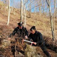 A Bagnone taglio scriteriato e illecito di 303 alberi pregiati