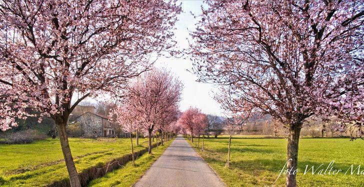Io già sento primavera che  s'avvicina con i suoi fiori…