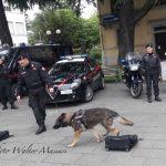Dimostrazione dei Carabinieri con le unità cinofile