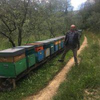 I produttori di miele chiedono un incontro con la Regione per affrontare i problemi del settore