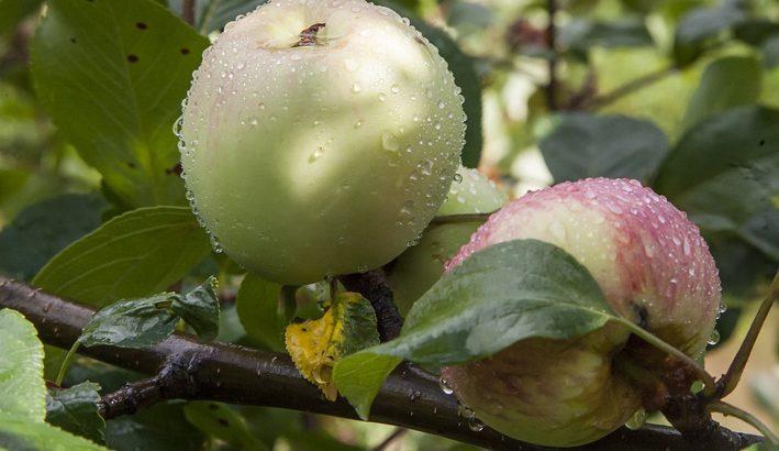 Settembre 'da funghi': umido, non piovoso