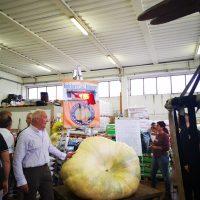 Torrano: la zucca gigante di Marco Fantoni arriva settima al concorso nazionale a Pontedera