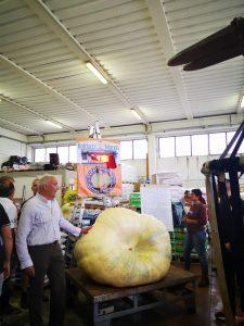 Marco Fantoni con la sua zucca al concorso di Pontedera