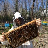 """""""Niente più città: ho lasciato tutto e faccio l'apicoltore in Lunigiana"""""""