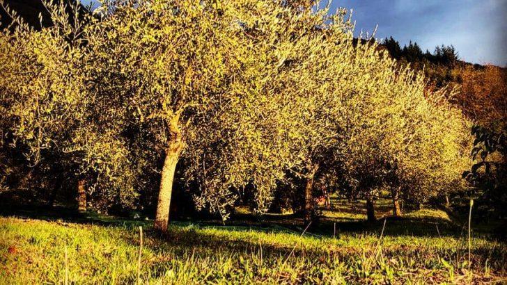 """Bagnone: """"Il Battesimo"""" dell'Azienda agricola di Caterina Sarti"""
