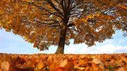 Addio a ottobre tra nebbia e sole