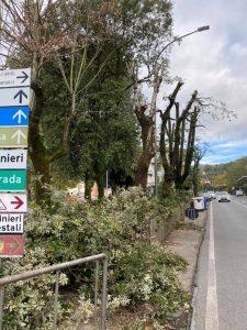 La recente potatura degli alberi presso i giardinetti di San Pietro