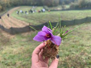 Un fiore raccolto dai ragazzi dell'agrario, da cui estrae lo zafferano
