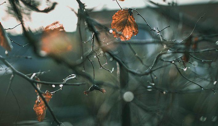 Novembre e il vento al banco di prova