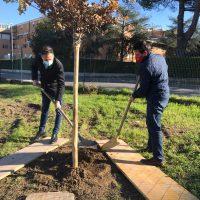 Un albero piantato per  ogni nuovo nato ad Aulla