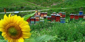 Il sentiero delle api tra i fiori