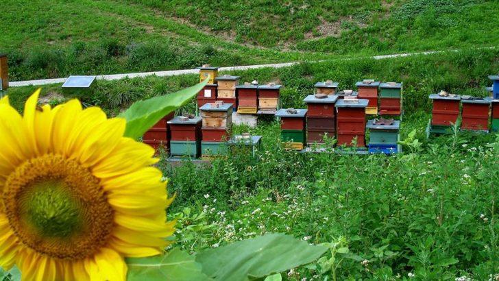 """A Fivizzano nasce """"Il sentiero delle api"""""""