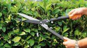 Provincia: taglio della vegetazione sulle Sp36 e Sp 37