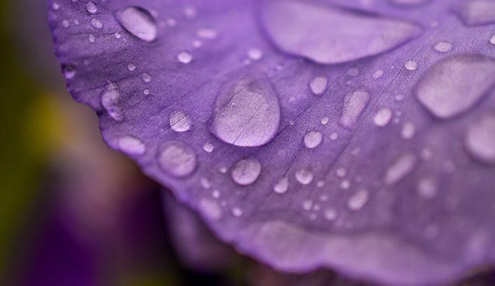 Su e giù termico verso le piogge di aprile