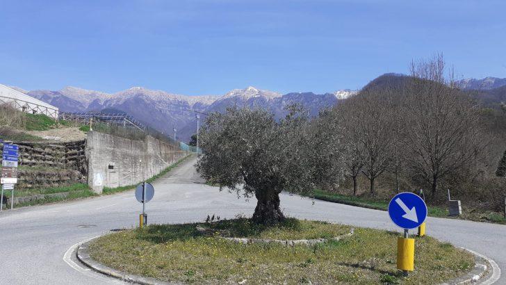 Impreziosite dalla presenza di piante di olivo le rotonde di Bagnone